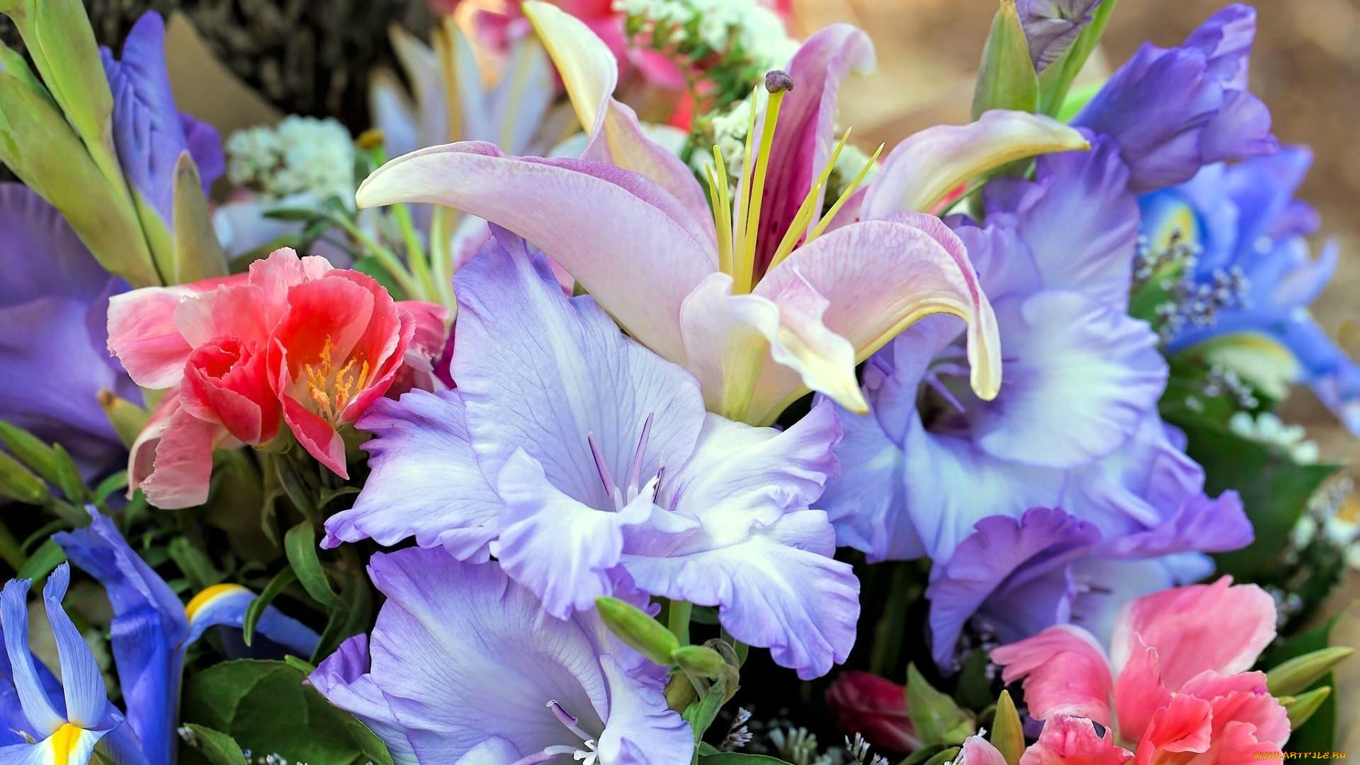 Амазонская лилия фото все трубочки